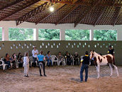 Mary works with Mangalarga yearlings and clinic participants in understanding how to calm a nervous horse naturally and safely