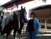 Marisa with two of her prized Mangalarga Paulista yearling colts.