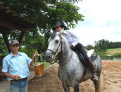 All the horses get chopped up sugar cane from their plantation as a treat. Humans love it too!