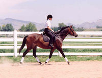 Midkiff prepared and trained horse for sale