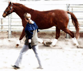 Taking care of performance horses