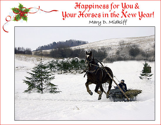 Happiness for your and your horses in the New Year!
